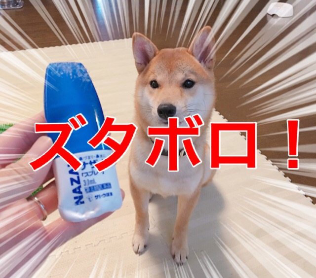 郎 柴犬 りんご