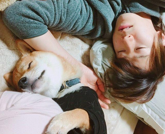 Image result for 犬 shiba 私のベッドで眠っている