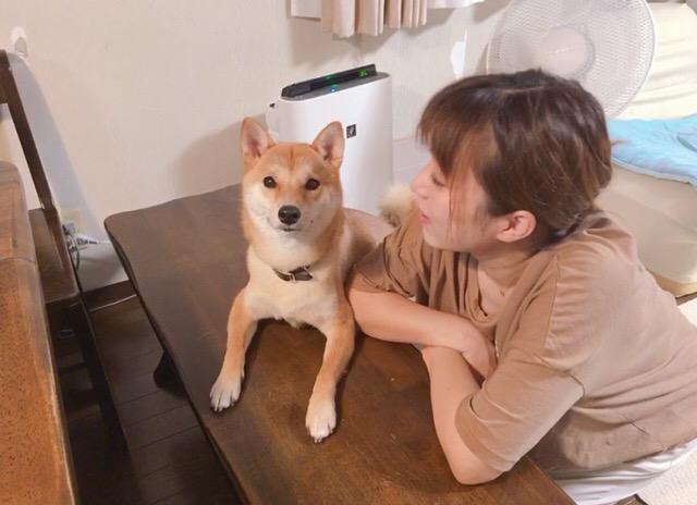 りんご 郎 ブログ 柴犬りんご郎ブログ - アイリスペットどっとコムにて6回目の日記を更新しました🐶🍎