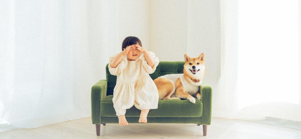 りんご 郎 ブログ 柴犬りんご郎ブログ